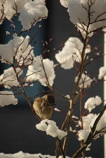 初雪かき_a0061023_06092998.jpg