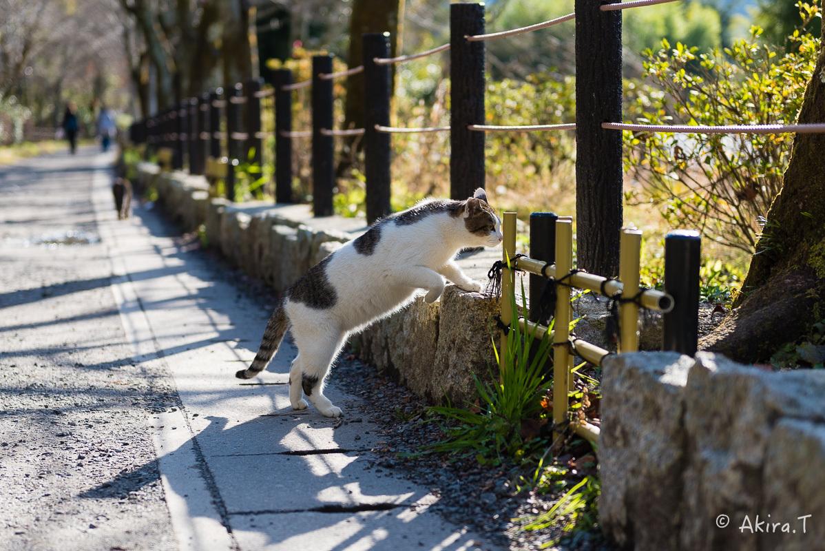 〜岩合光昭に挑戦〜 京都ネコ歩き -16-_f0152550_21371864.jpg