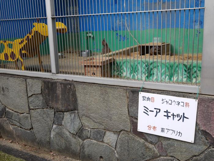 和歌山公園動物園にて_b0093754_1113445.jpg