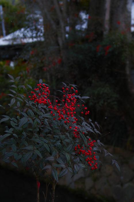 京都    1/14 雪なんかないやんの巻_f0021869_22052091.jpg