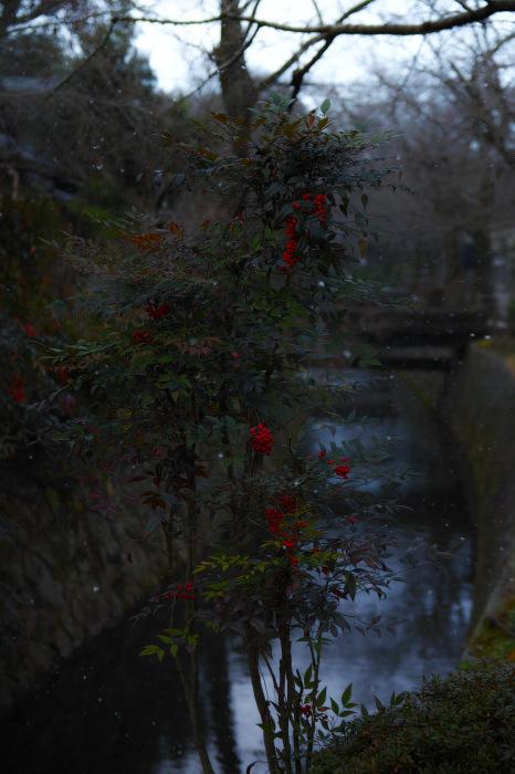京都    1/14 雪なんかないやんの巻_f0021869_22080631.jpg