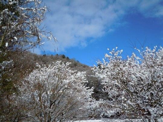 雪の中を炭焼きへと向かう_b0102572_2153987.jpg