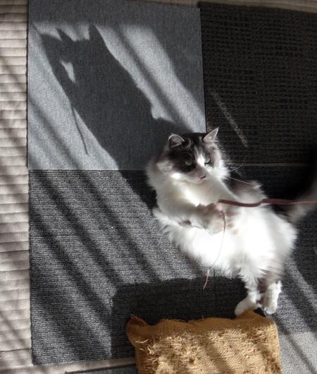 ニャンズ、紐一本にそれぞれの遊び方♪ 猫部屋のHuu^^_a0136293_1033786.jpg