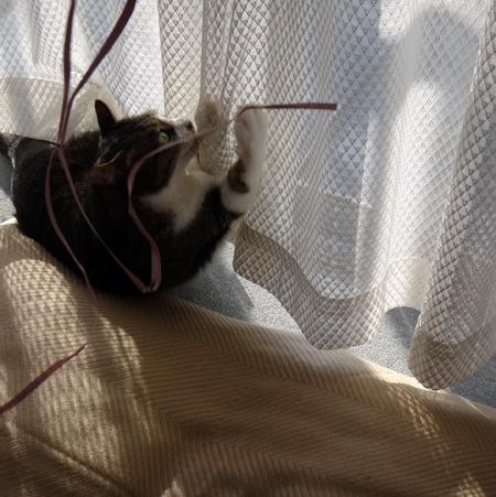 ニャンズ、紐一本にそれぞれの遊び方♪ 猫部屋のHuu^^_a0136293_10355166.jpg