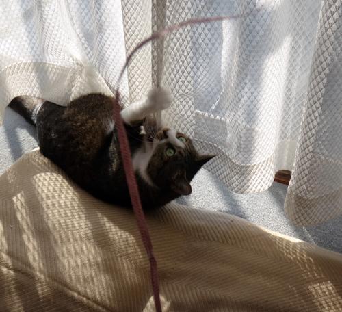 ニャンズ、紐一本にそれぞれの遊び方♪ 猫部屋のHuu^^_a0136293_10381991.jpg