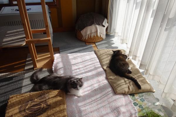 ニャンズ、紐一本にそれぞれの遊び方♪ 猫部屋のHuu^^_a0136293_1040749.jpg