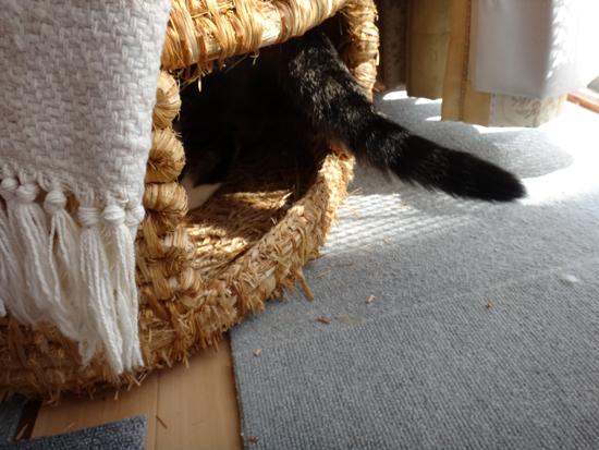 ニャンズ、紐一本にそれぞれの遊び方♪ 猫部屋のHuu^^_a0136293_1043179.jpg