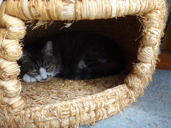 ニャンズ、紐一本にそれぞれの遊び方♪ 猫部屋のHuu^^_a0136293_10435054.jpg