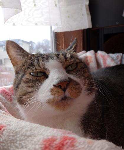 ニャンズ、紐一本にそれぞれの遊び方♪ 猫部屋のHuu^^_a0136293_11141523.jpg