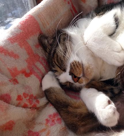 ニャンズ、紐一本にそれぞれの遊び方♪ 猫部屋のHuu^^_a0136293_11172967.jpg