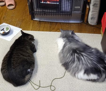 ニャンズ、紐一本にそれぞれの遊び方♪ 猫部屋のHuu^^_a0136293_11231293.jpg