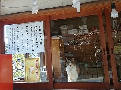 猫の巫女さん_e0077899_9243511.jpg