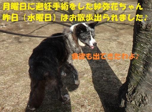 f0121712_22123605.jpg