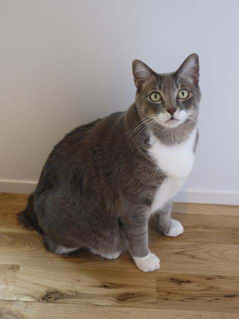 猫のお留守番 あーるくん編。_a0143140_19472091.jpg