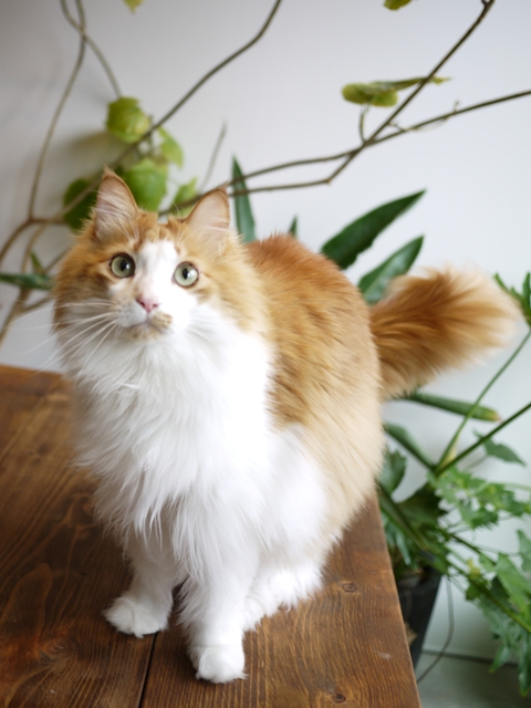猫のお留守番 もんてぃくん編。_a0143140_19501697.jpg