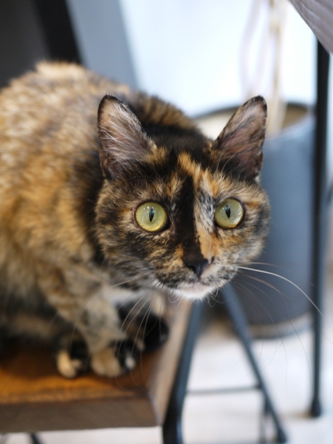 猫のお留守番 さんかちゃん編。_a0143140_19533085.jpg