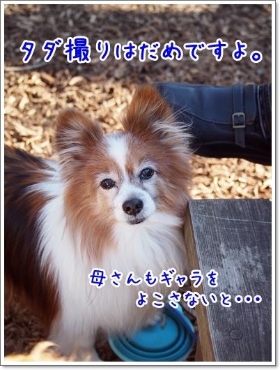 d0013149_00034006.jpg