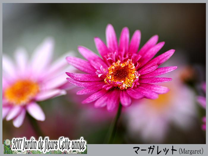 c0009981_16435471.jpg