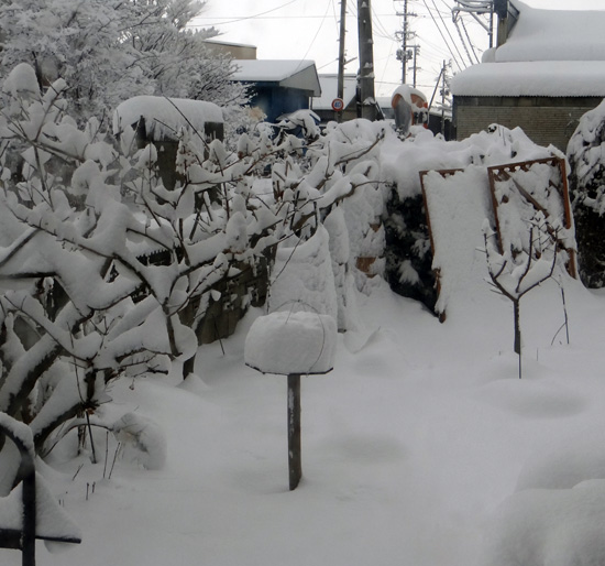 吹雪の朝のシジュウカラ、スズメの餌台など♪_a0136293_1662051.jpg