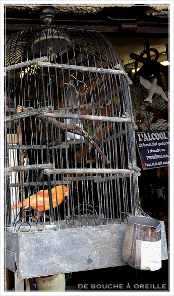 cage à oiseaux 古い鳥かご バードケージ _d0184921_13372984.jpg