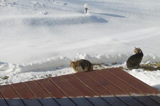 庭をお散歩中のネコたち_c0110869_983678.jpg