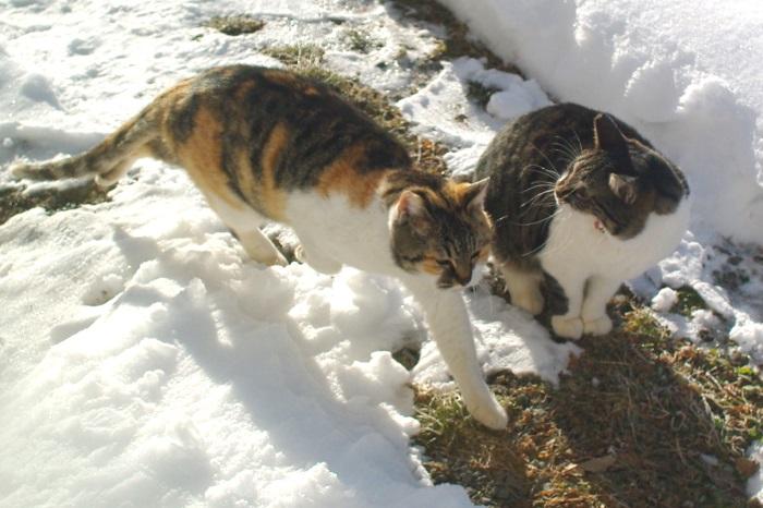 庭をお散歩中のネコたち_c0110869_98573.jpg