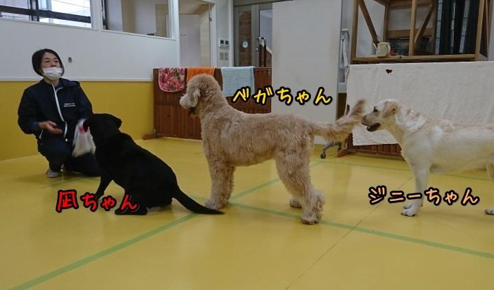 ボール大好きな大型犬♥_f0357682_12261336.jpg