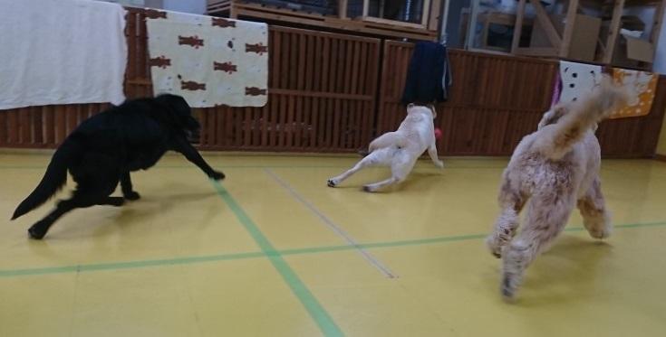 ボール大好きな大型犬♥_f0357682_12261361.jpg