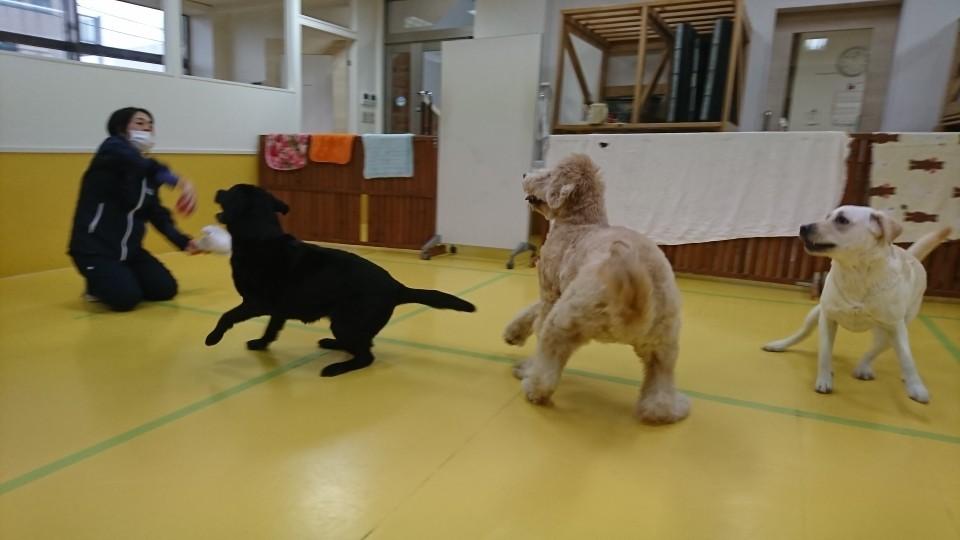 ボール大好きな大型犬♥_f0357682_12261404.jpg