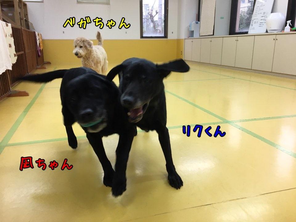 ボール大好きな大型犬♥_f0357682_14420948.jpg