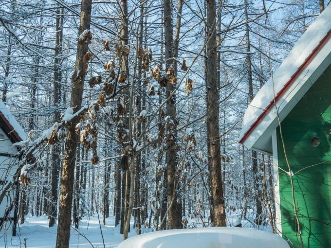 エゾリス君で始まり・・夕暮れで終わる・・真冬の一日。_f0276498_23515932.jpg