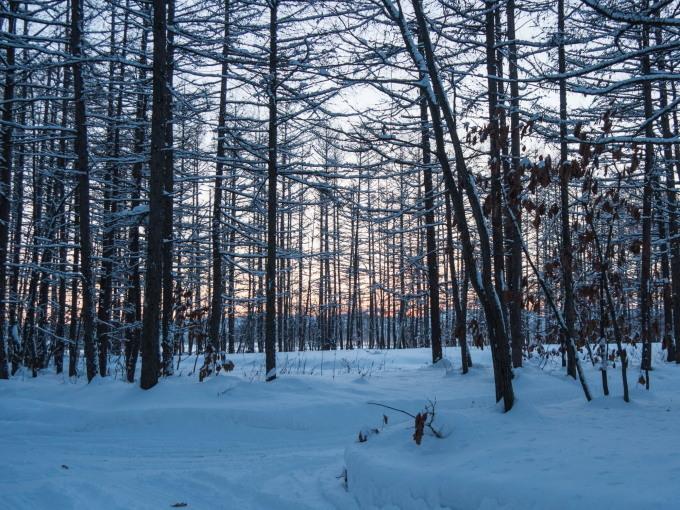 エゾリス君で始まり・・夕暮れで終わる・・真冬の一日。_f0276498_23555521.jpg