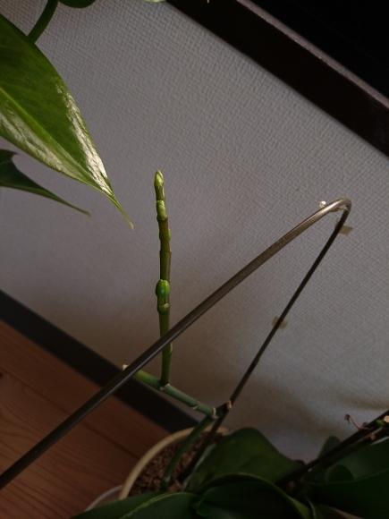 CO室のお花たち_f0068517_13380728.jpg