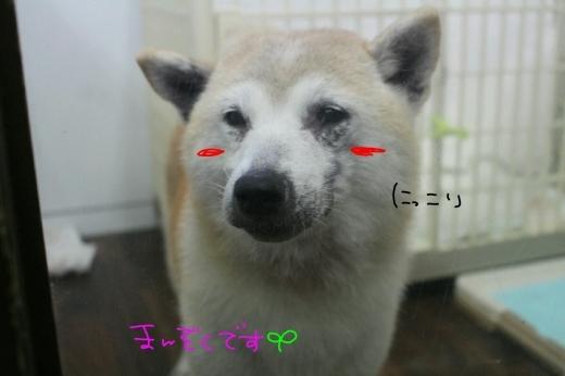 b0130018_00234073.jpg