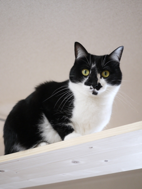 猫のお留守番 クルルちゃん編。_a0143140_2324369.jpg