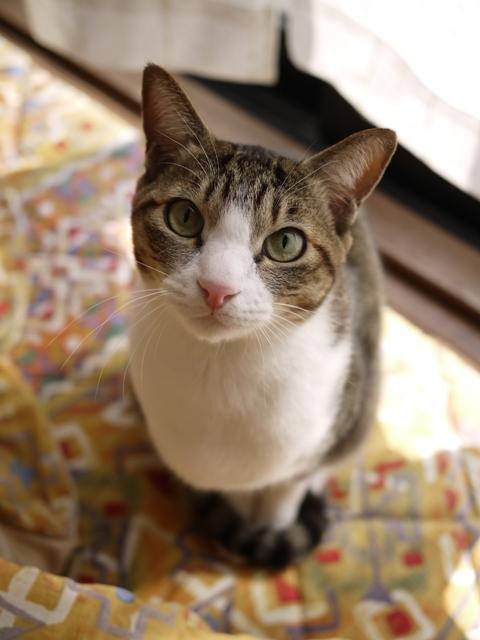 猫のお留守番 たんたんくん編。_a0143140_2395480.jpg