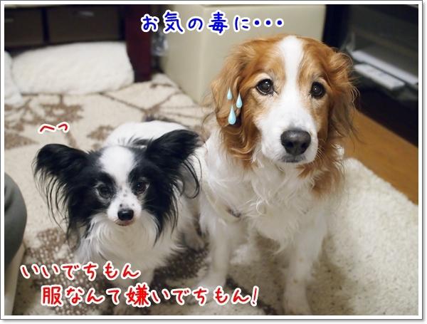d0013149_00174204.jpg