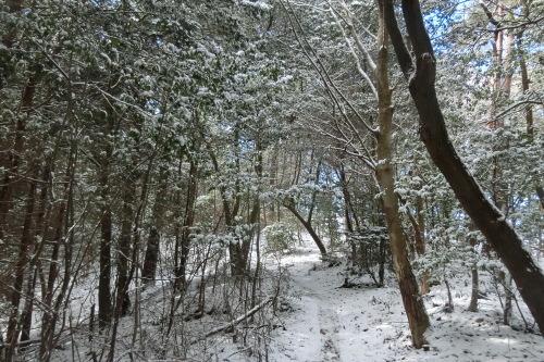 雪のMTB!_b0332867_00175719.jpg