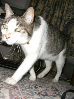 ネコは宇宙人が送り込んだ、人類を監視するスパイ_d0061678_11552456.jpg