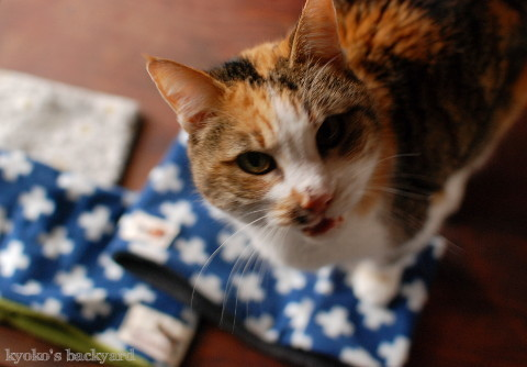 猫ばか印のネックウォーマー 第二弾 (動物・ペット部門)_b0253205_04534780.jpg