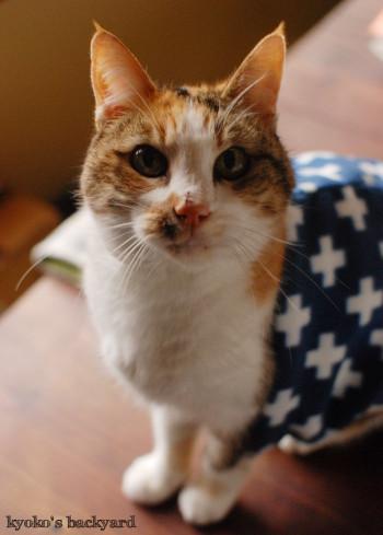 猫ばか印のネックウォーマー 第二弾 (動物・ペット部門)_b0253205_04541156.jpg