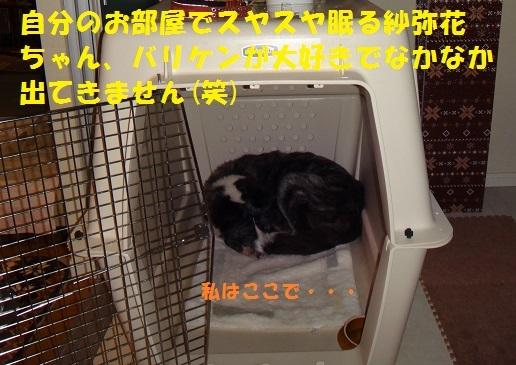 f0121712_00045480.jpg