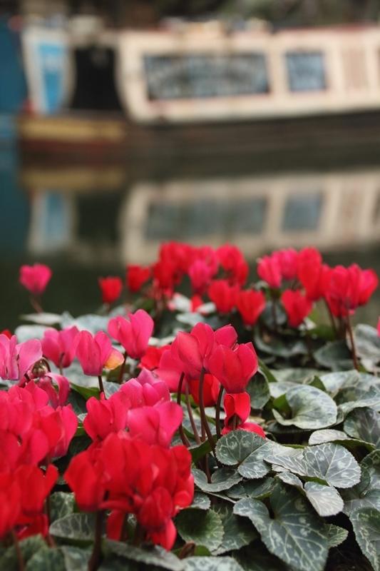 narrow boats_e0364223_19480813.jpg