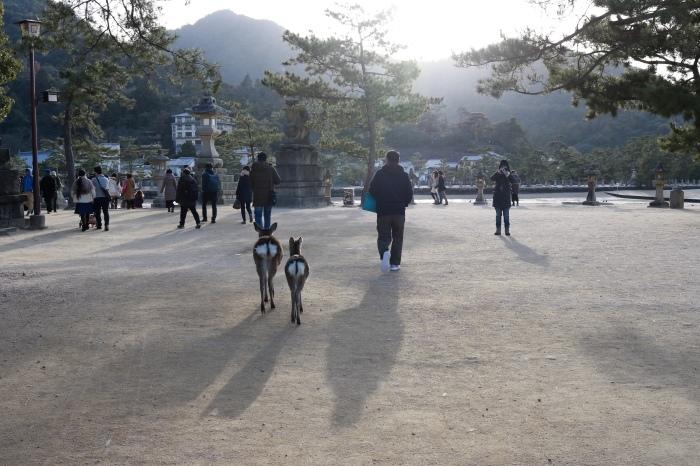 干潮の大鳥居 広島旅行 - 9 -_f0348831_15314738.jpg