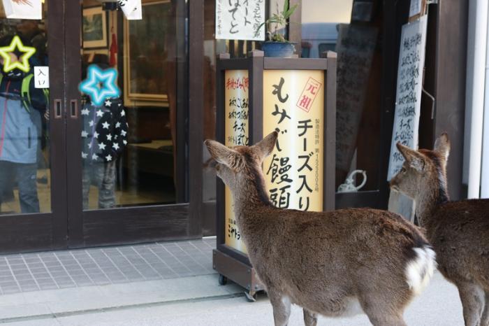 干潮の大鳥居 広島旅行 - 9 -_f0348831_15413115.png