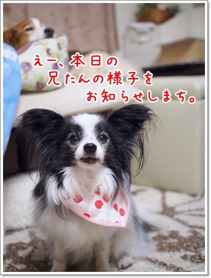 d0013149_23003981.jpg