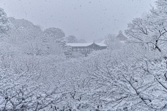 京都  東福寺  1/15 雪積もったけど1時間半しか時間ないの巻_f0021869_00323085.jpg