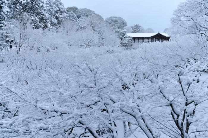京都  東福寺  1/15 雪積もったけど1時間半しか時間ないの巻_f0021869_00343039.jpg