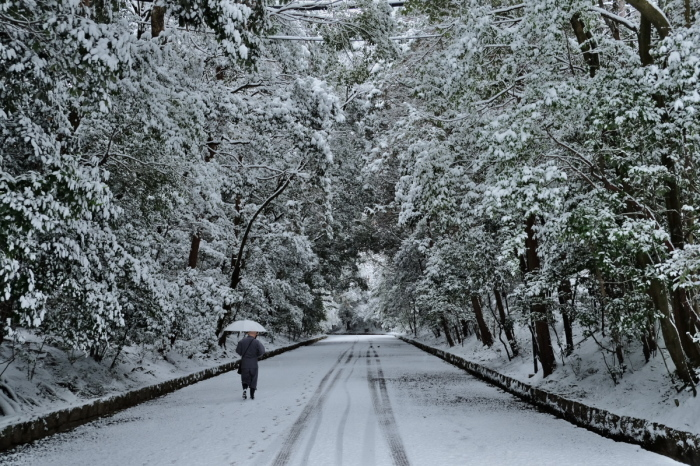 京都  東福寺界隈  1/15 雪積もったけど1時間半しか時間ないの巻_f0021869_22151116.jpg