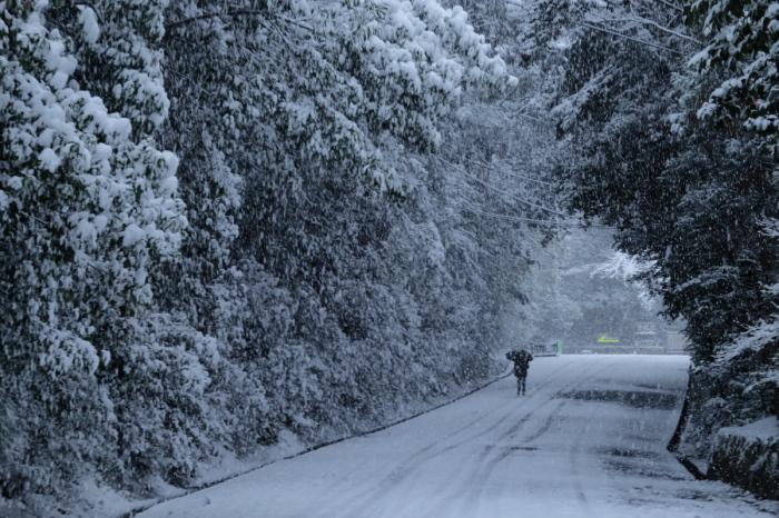 京都  東福寺界隈  1/15 雪積もったけど1時間半しか時間ないの巻_f0021869_22171715.jpg